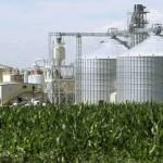 La Regione non prende posizione sulla Centrale a Biomasse di Guglionesi