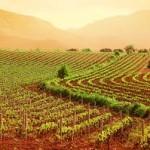Tutela dell'agricoltura e del turismo. Chiarimenti