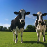 Settore agricolo e zootecnico in Molise